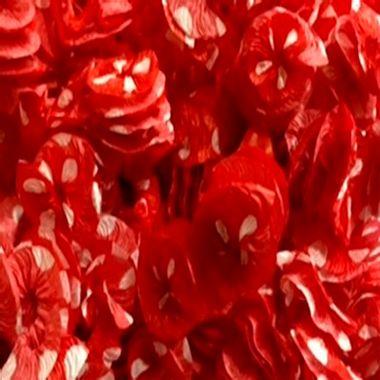 Papel-Rococo-Poa---para-bala-e-decoracao---cor-Vermelho-com-Branco---pacote-48-unidades